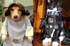 Lustige Halloween Kostüme für Hunde oder Katzen: May the animals be with you.