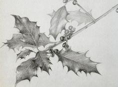 Holly, pencil drawing, botanical, Marjo Hofmann