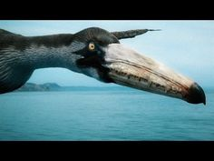 How the Largest Flying Bird of All Time Stayed Airborne - YouTube