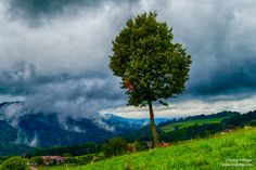 Just a tree before a storm