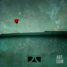 A Red Poppy on a Green House Photographic Print by Luis Beltran at Art.co.uk