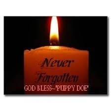 """ARE YOU APPALLED BY THIS ANIMAL CRUELTY? Does the torture of Puppy Doe enrage you? - it should. Then - Help find the torturers of """"Puppy Doe""""  https://www.facebook.com/JusticeForPuppyDoe"""