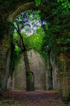 coisasdetere: A ruined church in East Somerton, England.