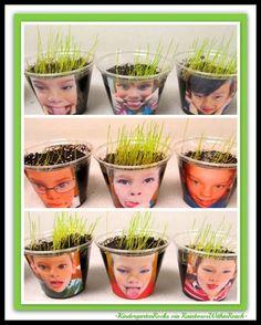 Science in Kindergarten: Growing Seeds with photo cups from Kindergarten Rocks via RainbowsWithinReach