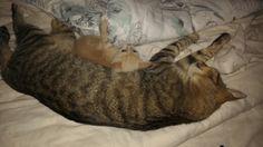 Sleeping with big brother