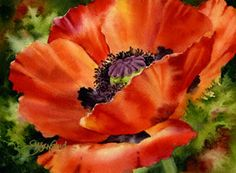 I do love poppies....watercolor by Susan Crouch