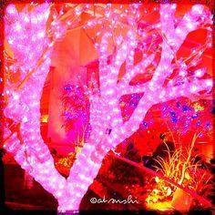 Christmas illuminations in JAPAN.
