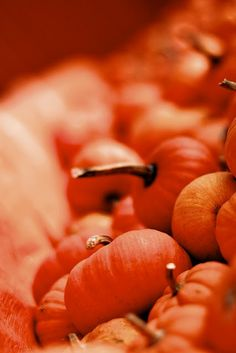 orange, laranja, color, cor, ilha da beleza
