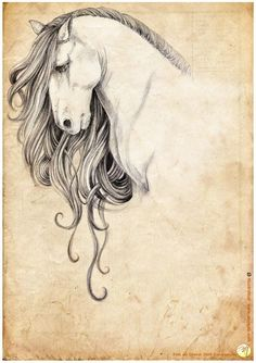 Image result for draw horse lots of hair