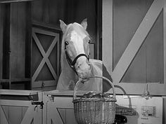 Mister Ed, Season Episode 26 The Blessed Event May Mister Ed, Harvester, Back In The Day, Donkey, Season 3, Bamboo, Nostalgia, Blessed