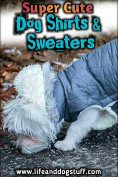 Cute Dog Shirts and Sweaters Super Cute Dog Shirts and Sweaters.Super Cute Dog Shirts and Sweaters. Food Dog, Super Cute Dogs, Dog Clothes Patterns, Dog List, Cat Dog, Cute Dogs And Puppies, Chihuahua Puppies, Dog Costumes, Halloween Costumes