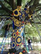 artist Carol Hummel climbs a ladder to attach colorful blue and gold knitted and crocheted pieces to the Willow Oak tree