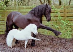 Horses, put one foot in front of the other, just like this....