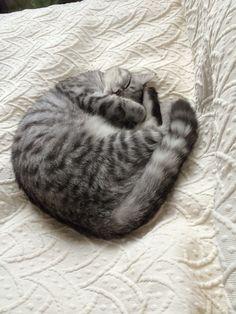 mini Katze | Pawshake
