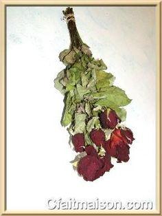 Séchage de roses rouges.