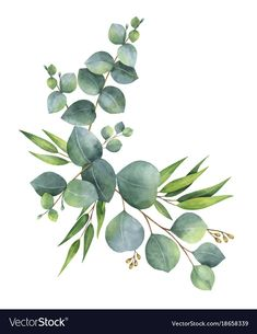 Watercolor vector wreath with green eucalyptus leaves and branches. Spring or su. Watercolor vector wreath with green eucalyptus leaves and branches. Spring or summer flowers for invitation, wedding or . Wreath Watercolor, Watercolor Leaves, Floral Watercolor, Watercolor Paintings, Watercolor Tattoo, Plants Watercolor, Watercolor Design, Illustration Blume, Illustration Botanique