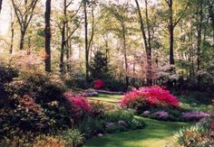 Landscaping with Rhododendrons and Azaleas l Donald W Hyatt