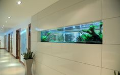 At 3 metres wide, the tropical freshwater aquarium has been constructed into the wall, dividing the two rooms. It acts as a window and draws natural light.
