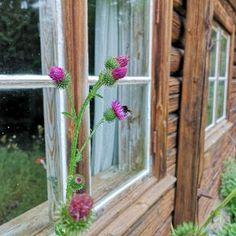 Kodin Kuvalehti – Blogit | Nelliina – Punaviinimarjat - mitä niistä voi tehdä Plants, Plant, Planets