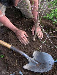 Don't get caught making these 7 tree-planting mistakes! Photo courtesy iStockphoto/Thinkstock (HobbyFarms.com)
