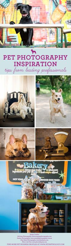 The Pet Anthology | Pet Business Profiles - Inspiration from leading Pet…