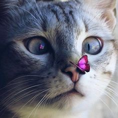 Cute Cat 😻 uploaded by Naina on We Heart It Cute Baby Cats, Cute Cats And Dogs, Cute Cats And Kittens, Cute Funny Animals, Cute Baby Animals, I Love Cats, Cool Cats, Kittens Cutest, Ragdoll Kittens