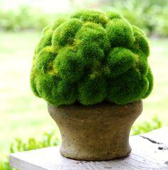 moss Garden Art, Garden Plants, Indoor Plants, House Plants, Garden Design, Garden Shop, Beautiful Gardens, Beautiful Flowers, White Flowers