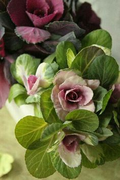 Purple and Green Ornamental Cabbage Pink Flowers, Beautiful Flowers, Simply Beautiful, Paper Flowers, Ornamental Cabbage, Cabbage Roses, Rose Cottage, Green And Purple, Belle Photo