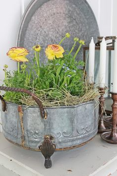 yellow Ranunculus and other Spring flowers in a magnificent and stately zinc container