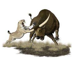 Smilodon fatalis and Bison latifrons.