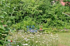 mano's welt: blick im juni 2014 Juni, Garden, Plants, Workplace, World, Garten, Lawn And Garden, Gardens, Plant