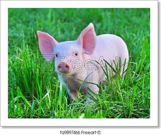 small pig - Artwork  - Art Print from FreeArt.com