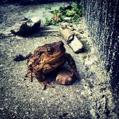 "@Sabine Schönberg's photo: ""Peter. The Frog."""