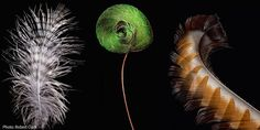 Bird Feathers, Like You've Never Seen Them Before From left to right: Spotted Eagle-Owl down feather, King Bird-of-Paradise tail wire, Superb Lyrebird tail feather. Feather Painting, Feather Art, Feather Tattoos, Bird Feathers, Diy Painting, Feather Meaning, Feather Wall Decor, Hydrangea Landscaping, Audubon Society