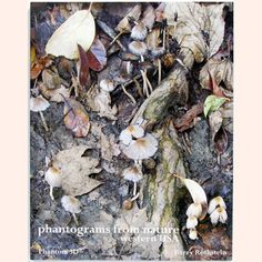 Phantograms From Nature by Barry Rothstein