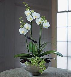 Autograph™ Orchid Cascade Bowl (Pre-Order) A beautiful orchid bowl.