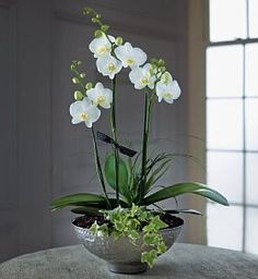 A beautiful orchid bowl.