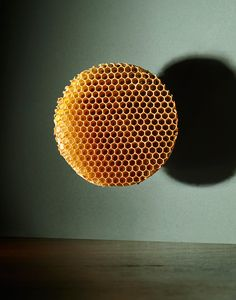 aarontilley-photography:  (via Kinfolk Trypophobia) A couple of recent images for Kinfolk magazine - read more about them on the news section of my site http://ift.tt/2nGpsPJ Follow us on Facebook http://ift.tt/1ZBR6Ym