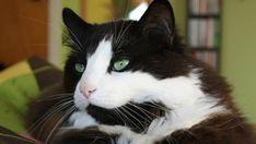 Notre vétérinaire explique comment fonctionne l'euthanasie d'un animal pour se préparer à affronter la situation lorsque le moment sera venu. Moment, Sally, Animaux