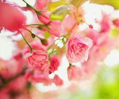 Buscar imágenes de spring