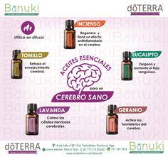 Mantener una salud cerebral se puede realizar a través de los #AceitesEsenciales de doTERRA. Estos aceites esenciales capaces de penetrar y llegar, por medio de su aroma hasta nuestro cerebro, aportando maravillosos beneficios... ¿Quieres conseguirlos? Estamos en la Calle 18 de Julio # 201. Col. Periodistas en Pachuca de Soto Horario de Lunes a Viernes de 9am a 7pm. Teléfono: 15 32 6 52 WhatsApp : 771 129 7215 My Doterra, Doterra Blends, Doterra Essential Oils, Essential Oil Recipies, Castor Oil Benefits, Esential Oils, Doterra Recipes, Spa, Essential Oil Diffuser Blends