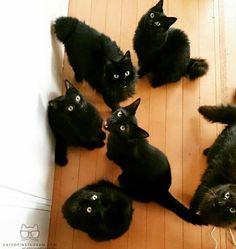 https://www.instagram.com/cats_of_instagram/