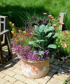 Edible Gardening Need new container ideas? How about adding edible plants in with flowers? Get inspired by these beautiful pots filled with ornamental and edible plants! Easy Vegetables To Grow, Container Herb Garden, Edible Plants, Plants, Growing Vegetables, Perennials, Container Gardening Veggies, Container Gardening, Garden Containers