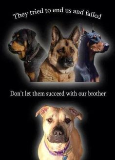 Don't let  them destroy our brother breed just like they tried to do the same to us