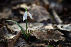 spring - spring flowers Spring Flowers, Plant Leaves, Pretty, Plants, Photography, Color, Photograph, Fotografie, Colour