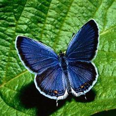 borboletas-p.