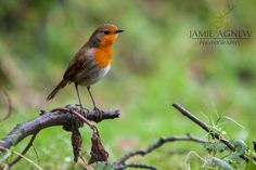 Robin in the Rain by JamieStarkWinchester
