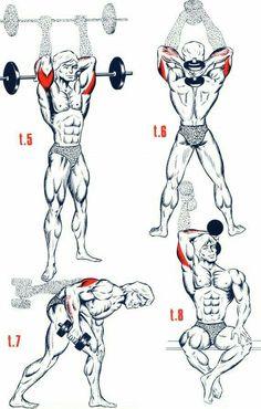 3ceps