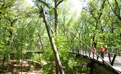 Host an exciting party high among the trees of Storza Woods.
