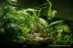 A view from another angle inside my BiOrbAir terrarium.  Pictured on 8th December 2015.